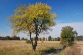 ZACHELMIE-krajobraz-2008-002