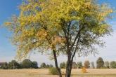 ZACHELMIE-krajobraz-2008-003